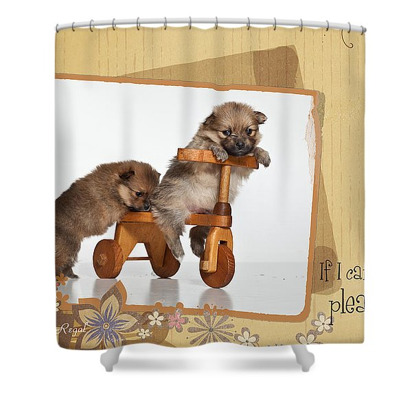 Pomeranian 1 Shower Curtain by Everet Regal