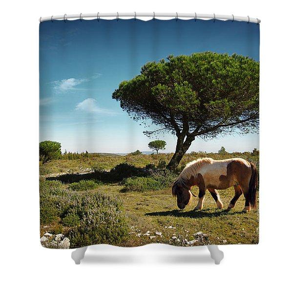 Pony Pasturing Shower Curtain by Carlos Caetano