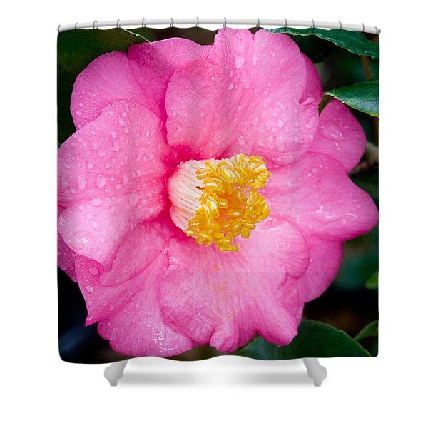 Pretty in Pink 2 Shower Curtain by Rich Franco