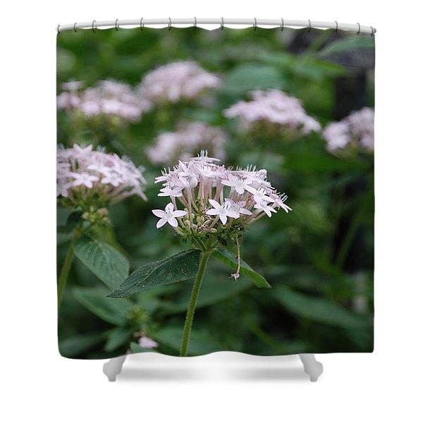 Purple Flower Shower Curtain by Jennifer Lyon