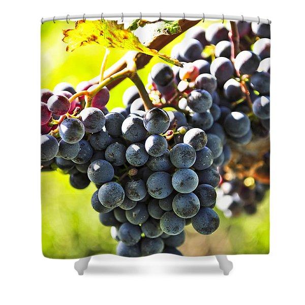 Purple grapes Shower Curtain by Elena Elisseeva