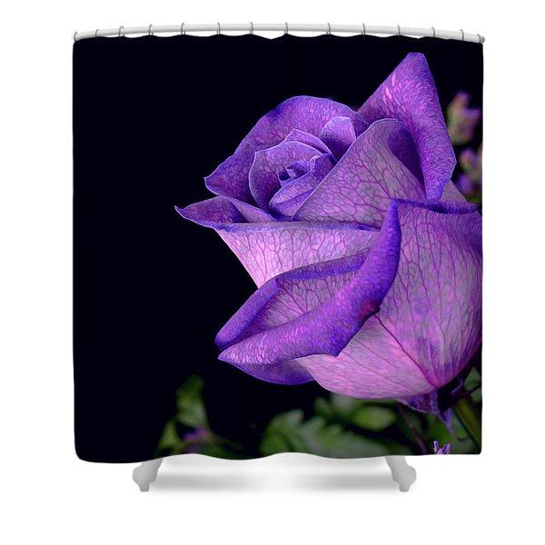 Purple Rose Shower Curtain by Darren Fisher