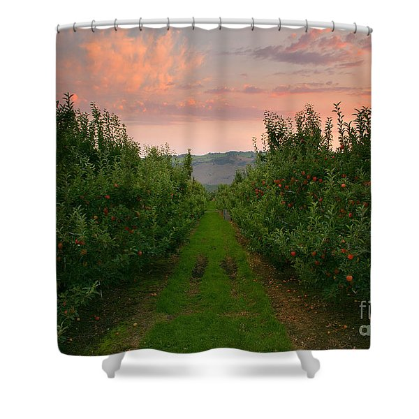 Red Apple Sunset Shower Curtain by Mike  Dawson