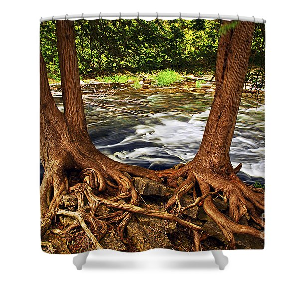 River and trees Shower Curtain by Elena Elisseeva