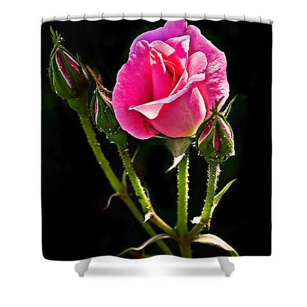 Rose And Buds Shower Curtain by Robert Bales