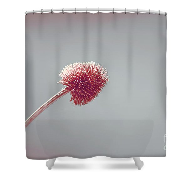 Sans Nom - s03b Shower Curtain by Variance Collections