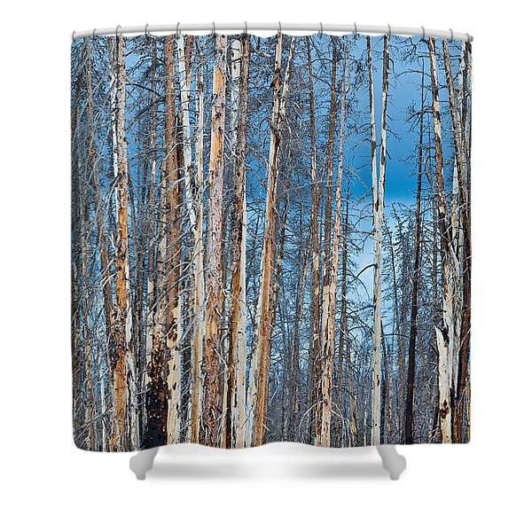 Scarred Pines Yellowstone Shower Curtain by Steve Gadomski