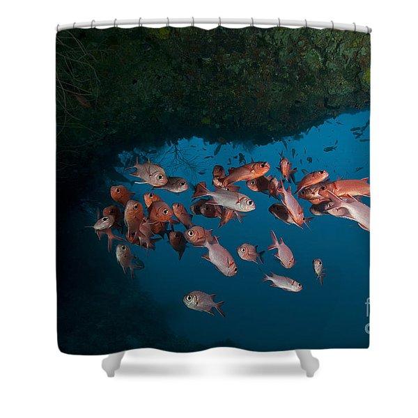 School Of Red Bigeye Under A Rocky Shower Curtain by Mathieu Meur