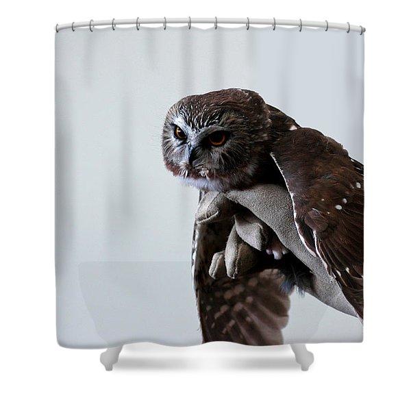Screech Owl Shower Curtain by LeeAnn McLaneGoetz McLaneGoetzStudioLLCcom