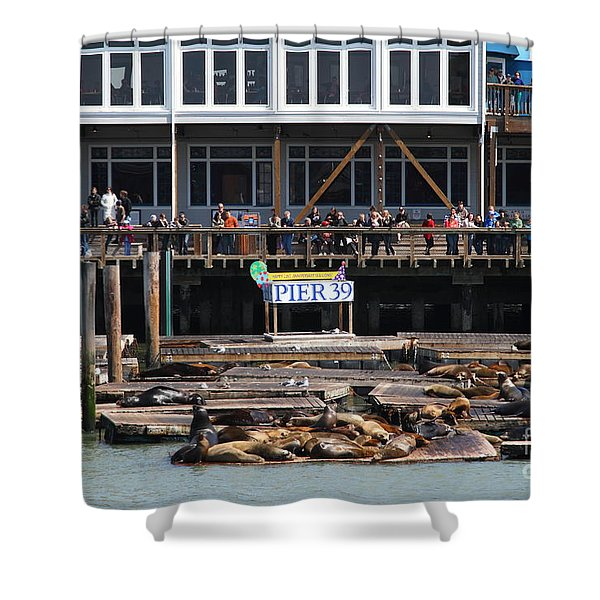Sea Lions At Pier 39 San Francisco California . 7d14272 Shower Curtain by Wingsdomain Art and Photography
