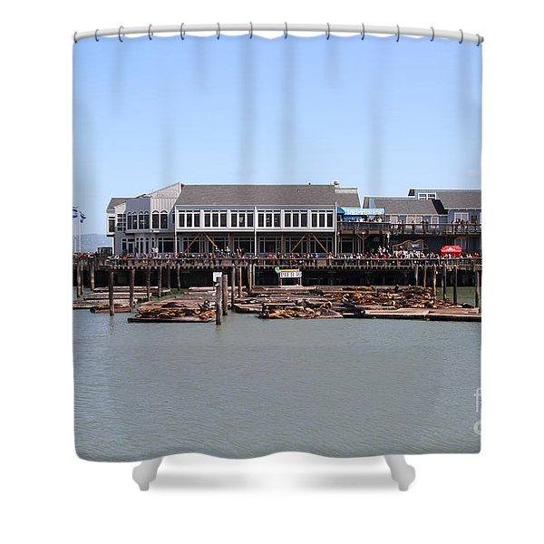 Sea Lions At Pier 39 San Francisco California . 7d14273 Shower Curtain by Wingsdomain Art and Photography