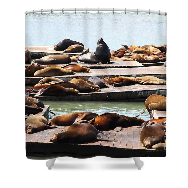 Sea Lions At Pier 39 San Francisco California . 7D14316 Shower Curtain by Wingsdomain Art and Photography