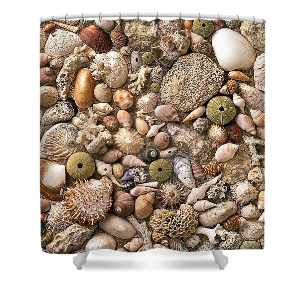 Sea Shells Shower Curtain by Mauro Celotti