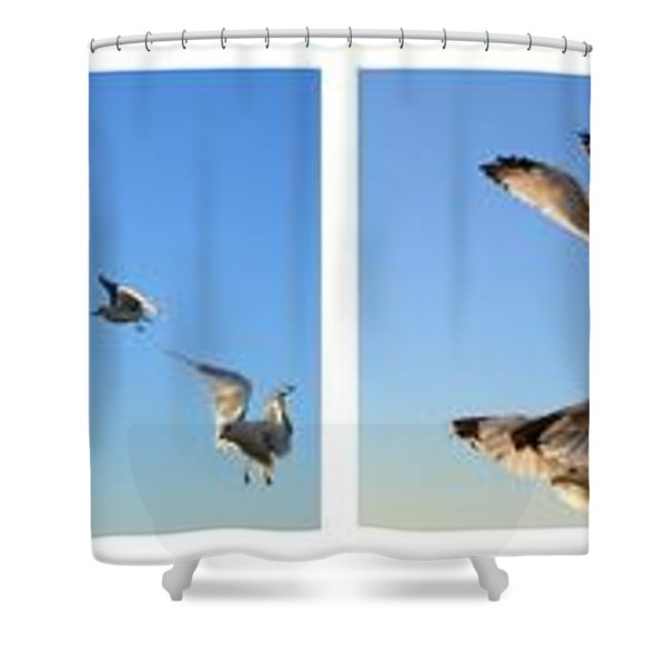 Seagull Collage Shower Curtain by Michelle Calkins