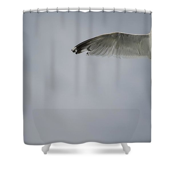 Seagull Shower Curtain by Keith Levit