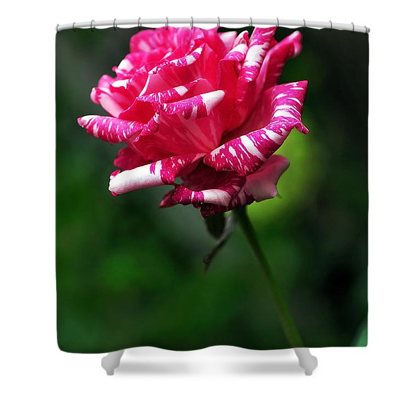 Sexy Rexy Rose Shower Curtain by Kaye Menner