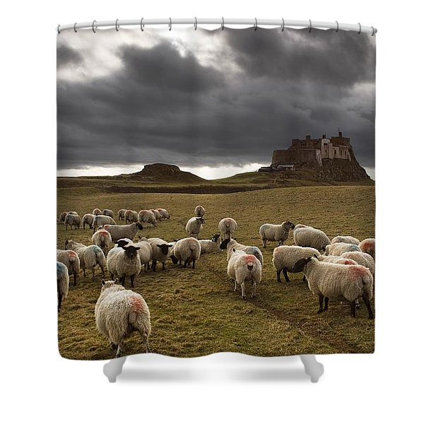 Sheep Grazing By Lindisfarne Castle Shower Curtain by John Short