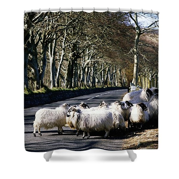 Sheep On The Road, Torr Head, Co Shower Curtain by The Irish Image Collection