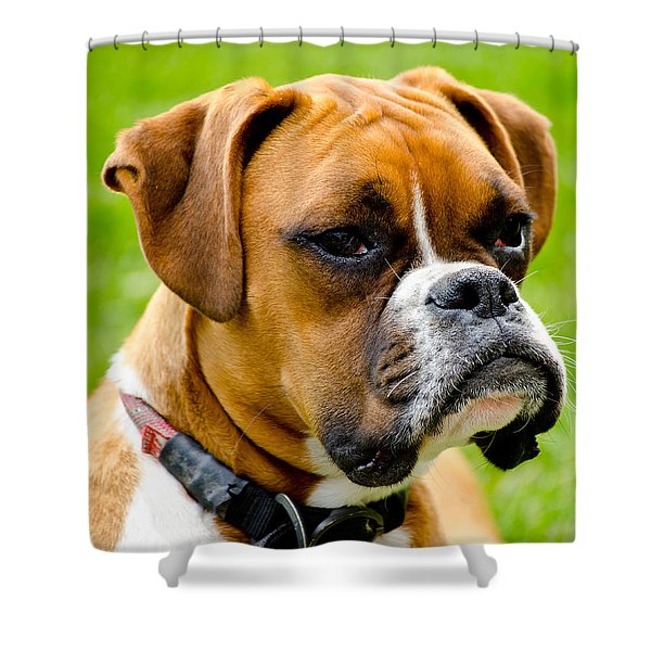 Sidney The Boxer Shower Curtain by Chris Thaxter