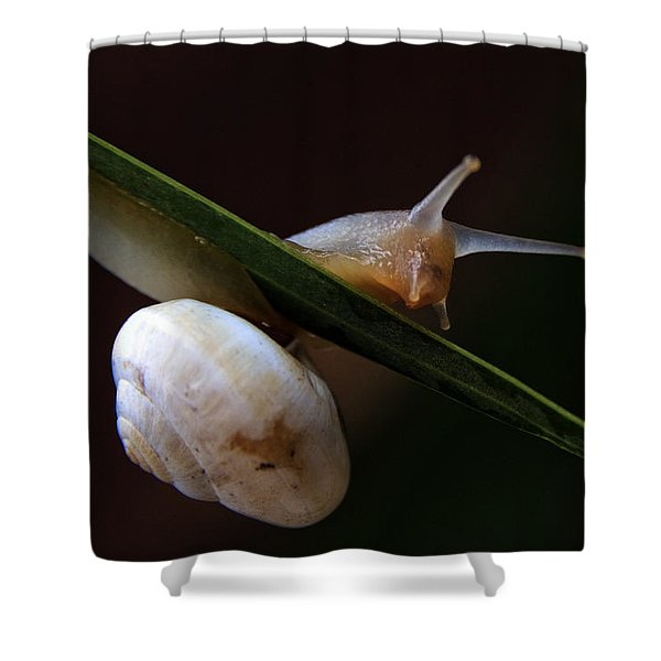 snail Shower Curtain by Stylianos Kleanthous