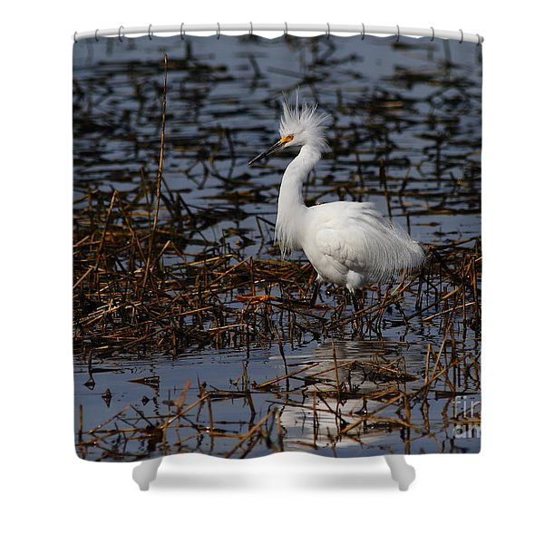 Snowy Egret . Solitude . 7d11963 Shower Curtain by Wingsdomain Art and Photography