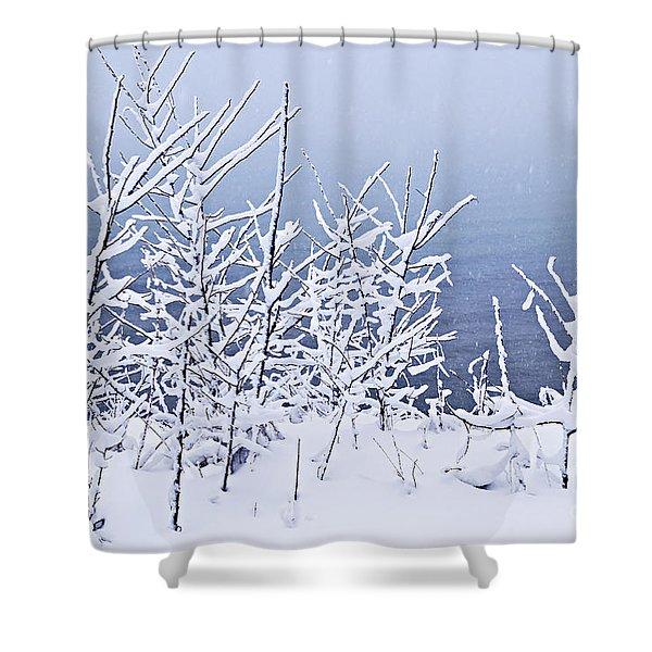 Snowy trees Shower Curtain by Elena Elisseeva