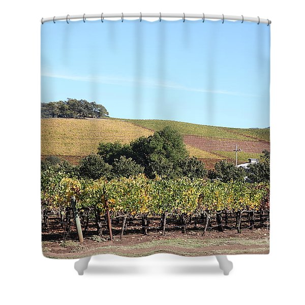 Sonoma Vineyards - Sonoma California - 5D19307 Shower Curtain by Wingsdomain Art and Photography