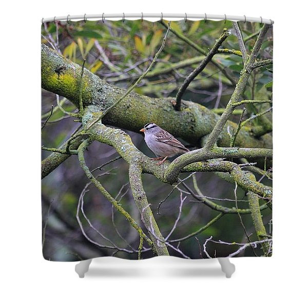 Sparrow Bird Perched . 40D12307 Shower Curtain by Wingsdomain Art and Photography