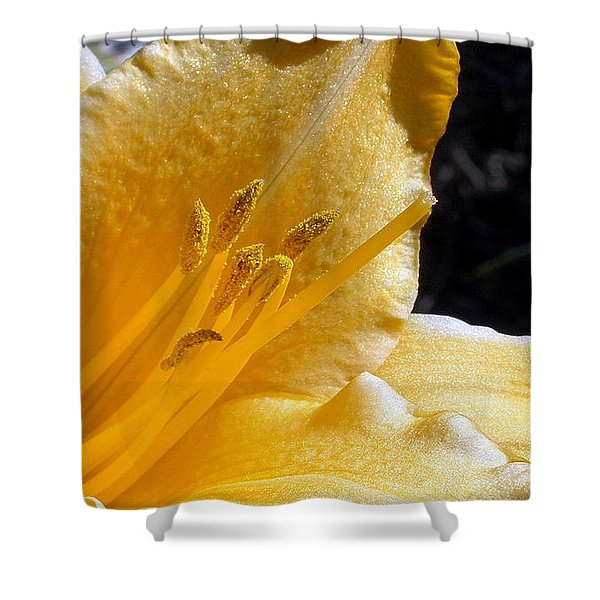 Stella D'oro - Day Lily Shower Curtain by Kaye Menner
