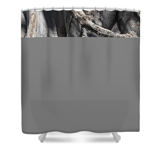 Strong Roots in Florida Shower Curtain by Carol Groenen