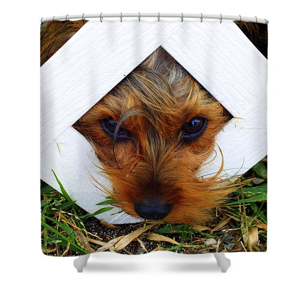 Stuck On You Shower Curtain by KAREN WILES
