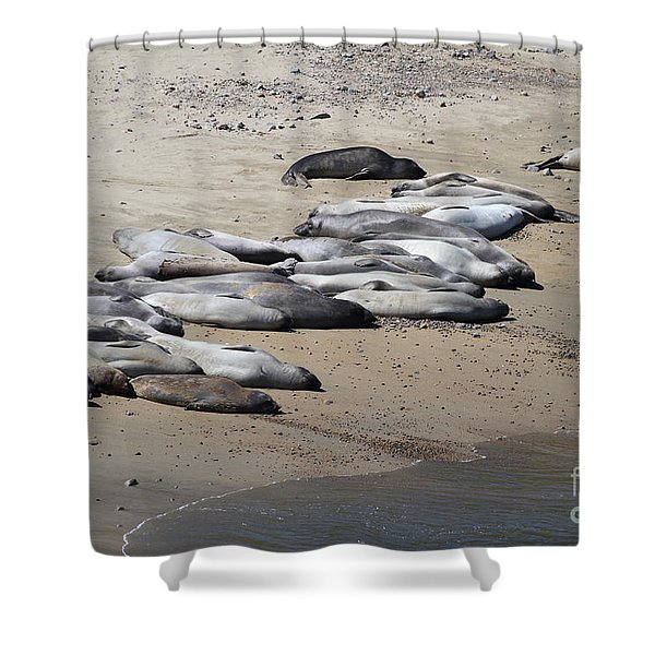 Sunbathing Elephant Seals Along A Beach At Point Reyes California . 7D16063 Shower Curtain by Wingsdomain Art and Photography