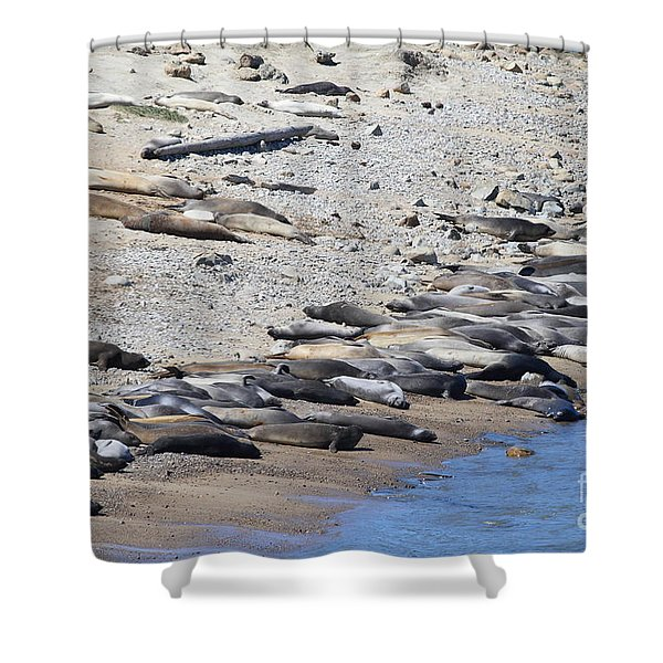 Sunbathing Elephant Seals Along A Beach At Point Reyes California . 7d16065 Shower Curtain by Wingsdomain Art and Photography