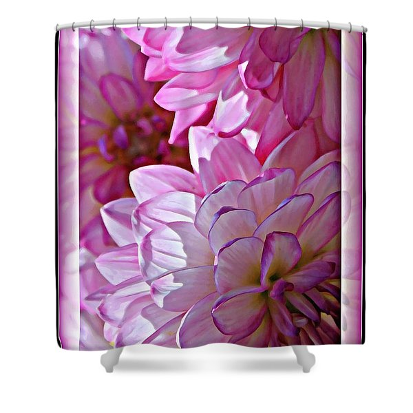 Sunlight through Pink Dahlias Shower Curtain by Carol Groenen