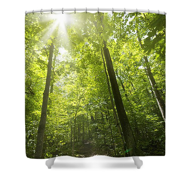 Sunny Forest Path Shower Curtain by Elena Elisseeva