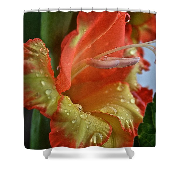 Sunny Glads Shower Curtain by Susan Herber