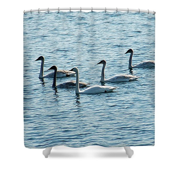 Swans Swimming Shower Curtain by Aimee L Maher Photography and Art