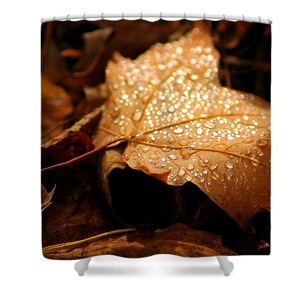 The enlightened Maple leaf Shower Curtain by LeeAnn McLaneGoetz McLaneGoetzStudioLLCcom