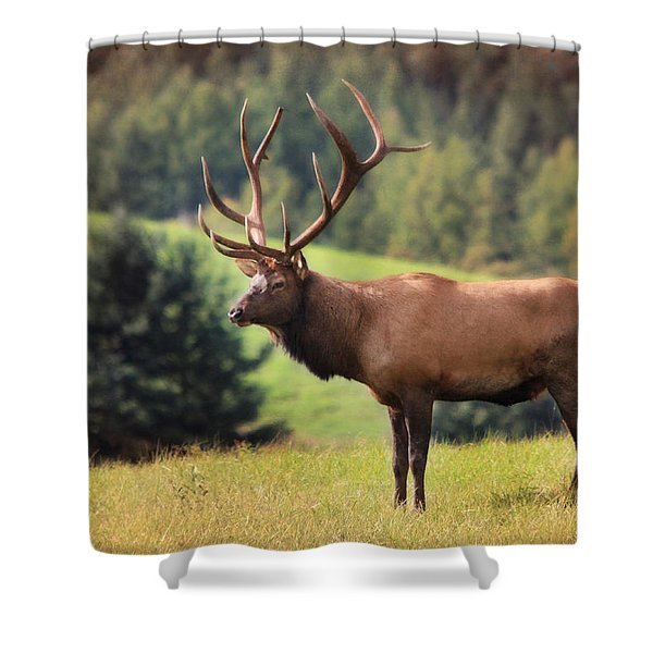 The King of Winslow Hill Shower Curtain by Lori Deiter