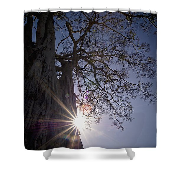 The Sunlight Shines Behind A Tree Trunk Shower Curtain by David DuChemin