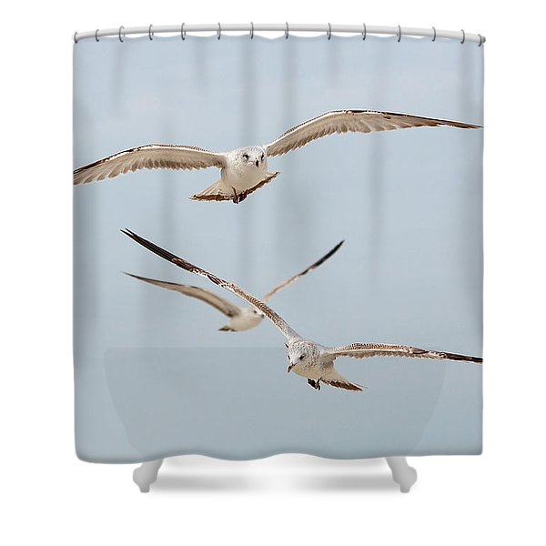 Three Gulls Shower Curtain by Kenneth Albin