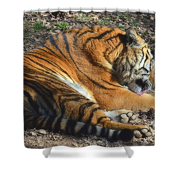 Tiger Behavior Shower Curtain by Sandi OReilly