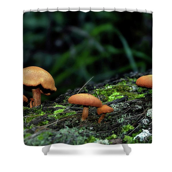 Toadstool Village Shower Curtain by Kaye Menner