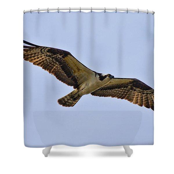 Topsail Osprey Shower Curtain by Betsy C  Knapp