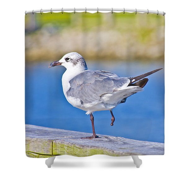 Topsail Seagull Shower Curtain by Betsy C  Knapp