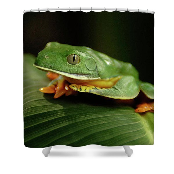 Tree Frog 1 Shower Curtain by Bob Christopher