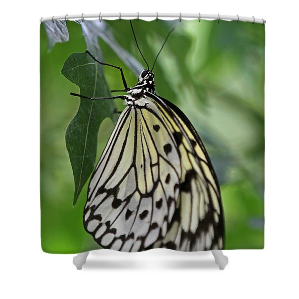 Tree Nymph Shower Curtain by Juergen Roth