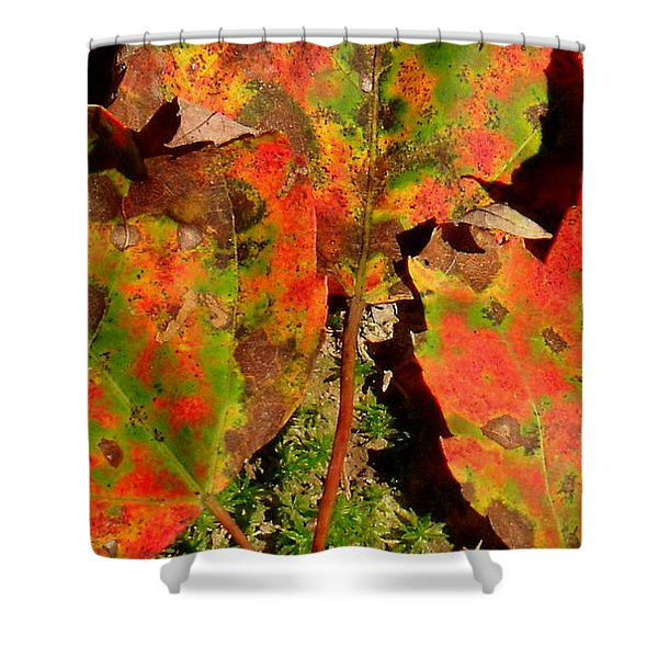 Tres Hojas Shower Curtain by Ed Smith