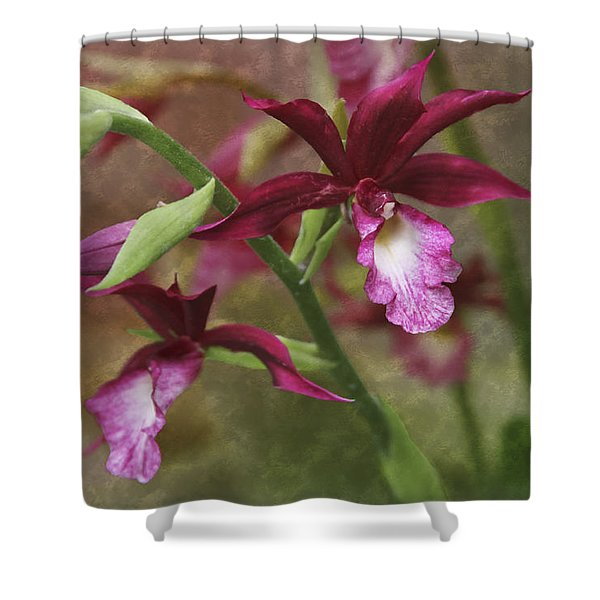 Tropical Beauty Shower Curtain by Debra and Dave Vanderlaan