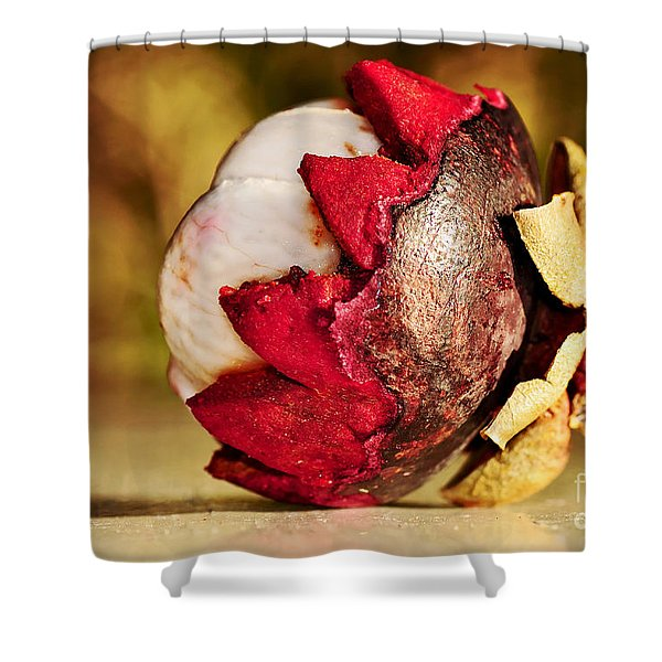 Tropical Mangosteen - Ready To Eat Shower Curtain by Kaye Menner